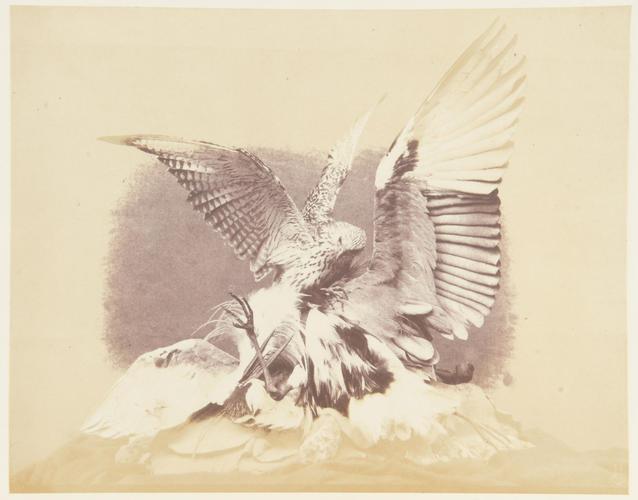'Hawk and Heron'