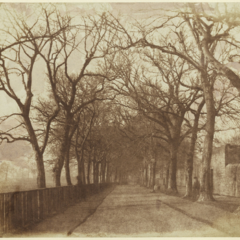 Photograph of an avenue of trees. On the left stands a wooden fence in front of the trees and on the right, behind the trees is a stone wall. On the right a single figure is discernible seated or standing between the second and third tree.
